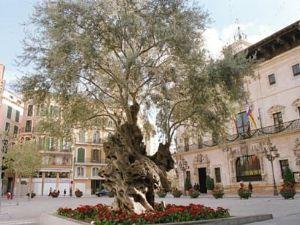 Plaza de Cort: en el corazón de Mallorca